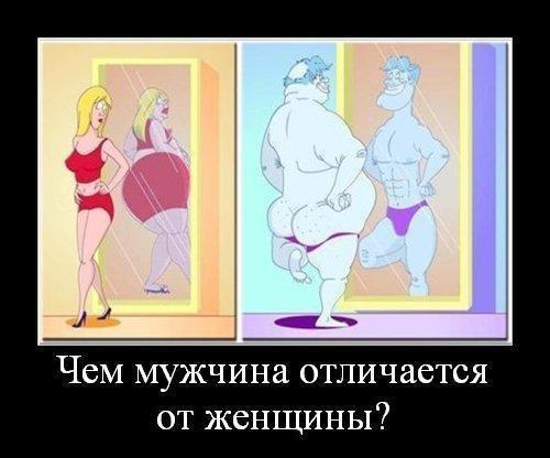 Чем мужчина отличается от женщины?
