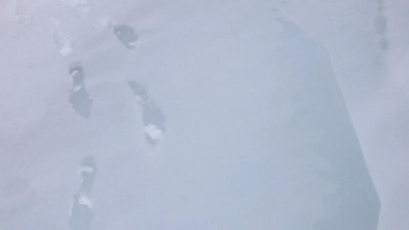 Катунь (примерно середина замёрзшей протоки) 1 января 2019 год.