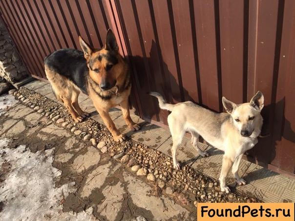Вязка породистой собаки с дворняжками