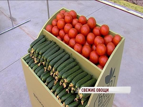 Огурцов и помидоров в регионе станет больше