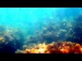 Тахтаров Владислав. Подводный мир черного моря, пгт. Орджоникидзе ( Villa Svetlana )