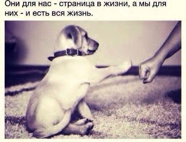 Фото №331828266 со страницы Катерины Мироновой