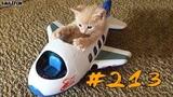КОТЫ 2019 Смешные коты и котики, приколы с котов до слез – Смешные кошки – Funny Cats