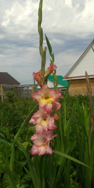 Цветы у Ликки KLiUReTg8LY