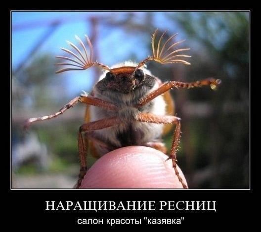 http://cs316423.userapi.com/v316423571/28f5/-JSUwxzEmlw.jpg