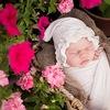 Фотограф новорожденных Елена Иванова. Томск.