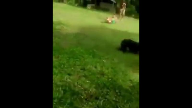 - cara, cuidado com esse cachorro - - pq Ele morde - - não, ele dibra