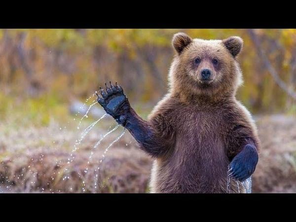✅ Решил Сходить на Охоту но Меня съел Медведь ✅