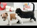 СМЕШНЫЕ КОТЫ 😺🎈 Смешные кошки Приколы про кошек и котов 2018 Прикольное видео для детей СМЕШНО