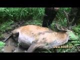 Жизнь в тайге на Дальнем Востоке  Часть 2  Охота на солонцах