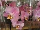 Новый завоз орхидей от 8 12 2018г