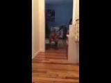 Собакен не хочет разбудить кота