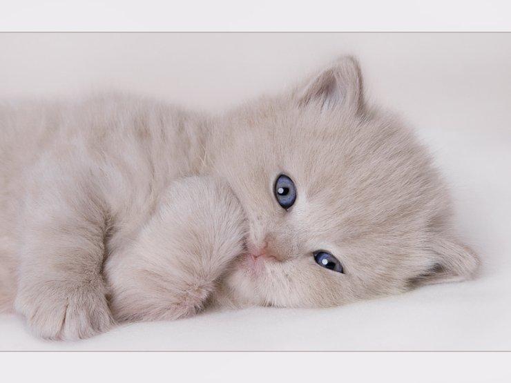 Картинки котят с надписью любимому, поздравления днем