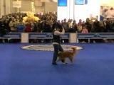 Евразия 2009 Прогресс 2 место. Фристайл (танцы с собаками)