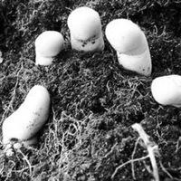 Buried Alive, 1 февраля 1991, Кугеси, id229377371