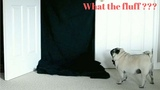 Dog's Amazing Reaction To Magic Trick What the fluff challenge compilation!