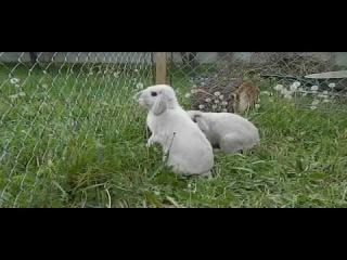 Секс кроликов.avi