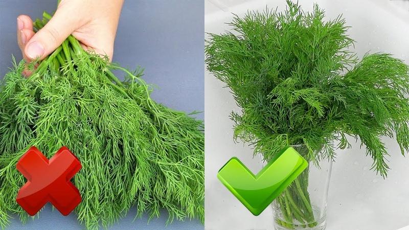 Зелень остается СВЕЖЕЙ до 2 х месяцев Рецепты из укропа УКРОПНАЯ ЗАВИСИМОСТЬ