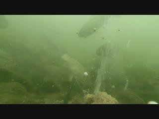 Вулкан из прикормки ( гейзер ) из прикормки, караси в шоке! подводное видео