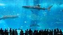 10 интересных фактов об Окинаве Япония