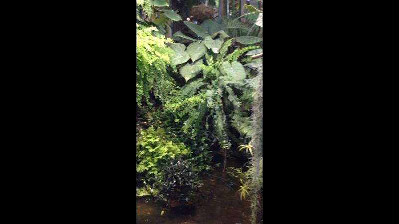 Тилландсия уснеевидная в Аптекарском огороде