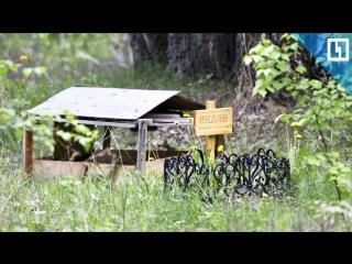 Кладбище домашних животных у детской площадки