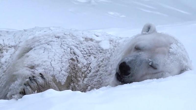 Обитатели нашего зоопарка искренне радуются снегу