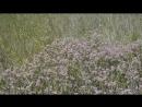 Лето июня Керченский п ов