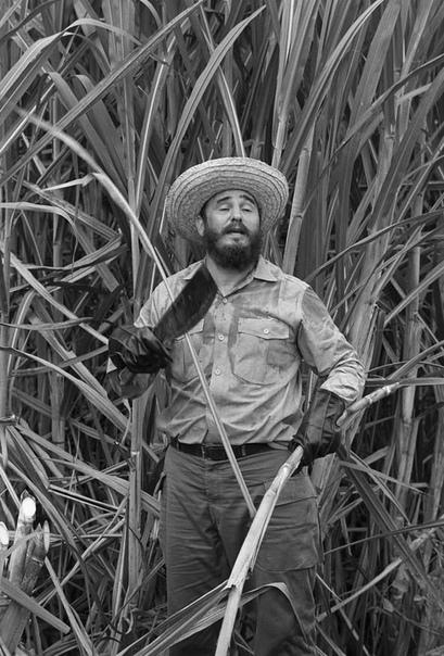 Фотография, на которой Фидель Кастро демонстрирует, как правильно рубить тростник