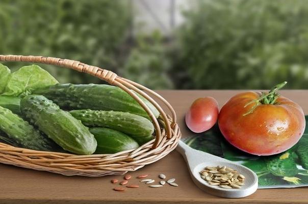 Можно ли собирать семена с гибридов