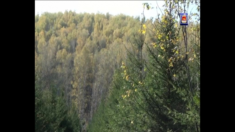 Проблемы связанные с льготным лесом для местного населения