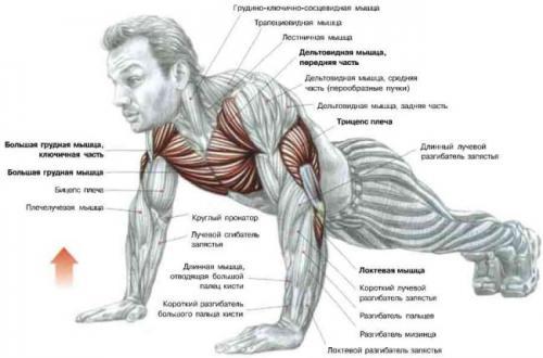 Прокачать мышцы можно и дома,