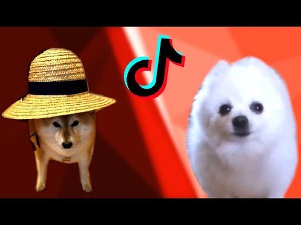 Maybe I'll be Doggo