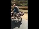 Как нужно перевозить свиней