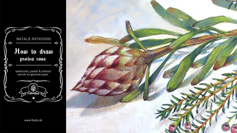How to draw protea cone (watercolor, gouache, pastel, colored pencils)