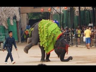 Впервые! Слон Художник на одной сцене со Слоном Баскетболистом! Супер шоу!