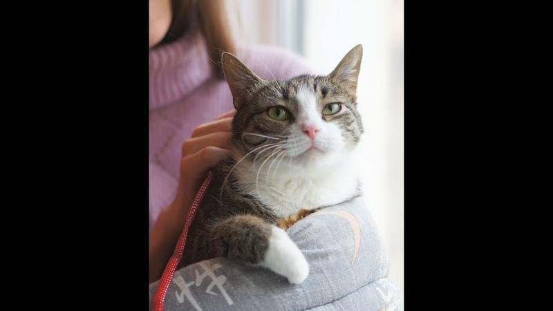 Кошка-ласкушка Сандра ищет дом. Спб