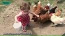 Девочка кормит Курочек! Приколы с Детьми! Мега Позитив! Funny Kids! 😊 приколы видео