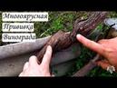 Многоярусная прививка винограда. Виноградник Владимира Дорошенко