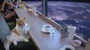 Space Cat (Mass Effect)