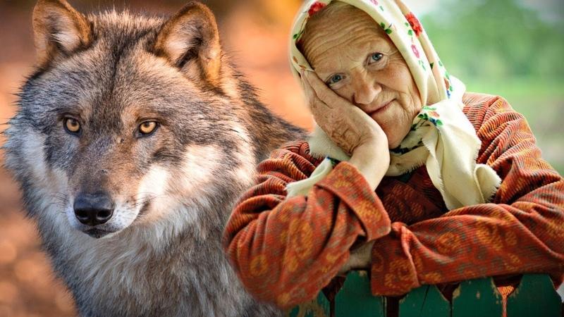 ВОЛЧЬЯ ПРЕДАННОСТЬ Да какая мне разница волк он или собака Он мой друг