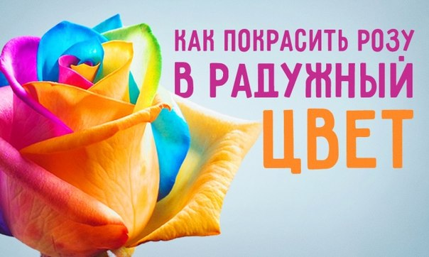 Как сделать обычную розу разноцветной: ↪ Ваши близкие будут в восторге!