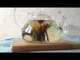 Заварил китайский чай, раскрывающийся цветок)
