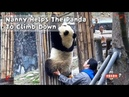 Nanny Helps The Panda To Climb Down iPanda