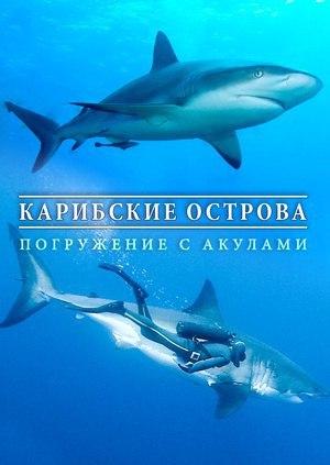 Карибские острова: Погружение с акулами