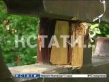 Коммунальный вандализм в Арзамасе - срезая деревья на кладбище, рабочие разрушил