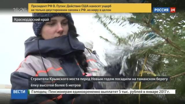 Новости на Россия 24 • Строители Крымского моста посадили 6-метровую ёлку