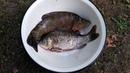 Рыба гриль Готовим рыбу на мангале