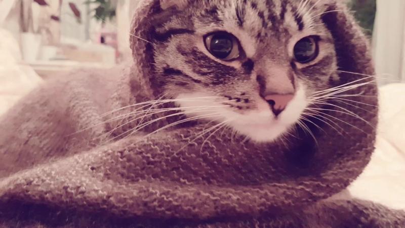 кошкабориска Котик я самая счастливая девушка А знаешь почему Потому что ты мой