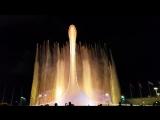 Вот такая красота  в Сочи парке ( Олимпийский )